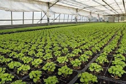 Как открыть бизнес по выращиванию овощей